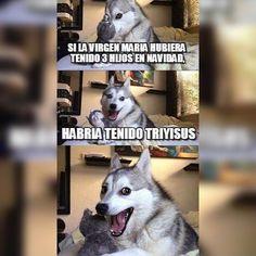 Funny, memes, and husky: what do you call dog magician? Husky Jokes, Funny Dog Jokes, Corny Jokes, Stupid Funny Memes, Funny Relatable Memes, Pun Husky, Dad Jokes, Dog Memes, Hilarious