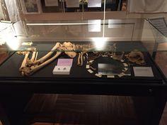 Racton Man at the Novium Museum Stone Age, Prehistory, Museum, Bronze, Prehistoric Age, Museums, Prehistoric
