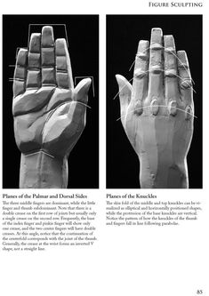 Planes of the hands . Book Figure Sculpting Volume I: Planes & Construction Techniques in Clay by Philippe Faraut Sculpture Clay, Sculpture Art, Hand Sculpture, Anatomy Sculpture, Anatomy For Artists, Zbrush, Human Figure, Anatomy Reference, Sculpting Clay