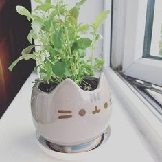 🌱 Pusheen Planter 🌱 I am taking offers on this. Brand new, never used, no scratches or chips. I was confident in keeping this so I threw the box away but I feel it's time for pusheen to go to a new home! Crazy Cat Lady, Crazy Cats, Pusheen Love, Pusheen Stuff, Pusheen Gifts, Kawaii Room, Oeuvre D'art, I Love Cats, My Room