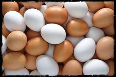 Blogintegratori: Notizie esaltanti sulle uova