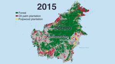 Forests on the island of Borneo are rapidly being converted to industrial plantations for palm oil and paper pulp.