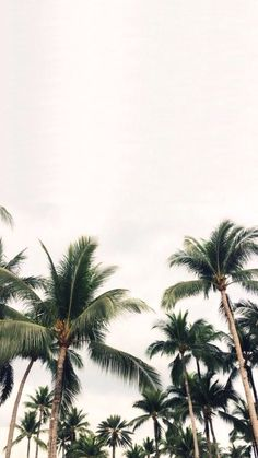 Underneath the palm trees You can leave your worries Summer Wallpaper, Wallpaper Downloads, Screen Wallpaper, Cool Wallpaper, Pattern Wallpaper, Phone Backgrounds, Wallpaper Backgrounds, Wallpaper Lockscreen, Iphone Wallpaper Tumblr Aesthetic