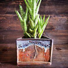 Love that slabrolled, handbuilt planter! Instagram photo by @seedlingclayworks