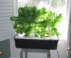 Build an indoor lettuce raft
