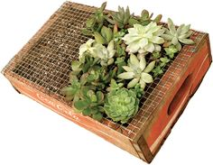 How to create your own vertical succulent garden.