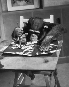 Congo, the famous artistic London Zoo chimpanzee, works on one of his paintings