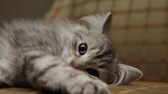 CUTE CAT WALLPAPER - (#52905) - HD Wallpapers - [desktopinHQ.com]