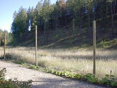 Almost invisible deer fence garden ideas pinterest for Fishing line deer fence