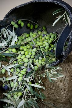 Olive oil extraction - this could have been in our yard….with this tire bucket.