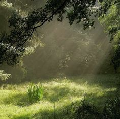 Nature Aesthetic, Aesthetic Green, Aesthetic Vintage, Forest Fairy, Pretty Pictures, Aesthetic Pictures, Ethereal, Mother Nature, Countryside