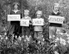 PROTECT THE WILD FLOWERS.