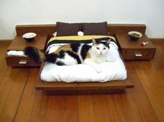 Без кота и жизнь не та ツ   VK