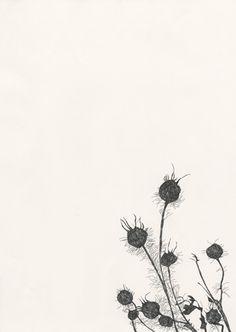 bloom17