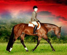 Artful Investment.  World Champion in: Amateur Hunter Under Saddle, Amateur Hunt Seat Equitation, Junior Hunter Hack, Junior Hunter Under Saddle and Junior Pleasure Driving.
