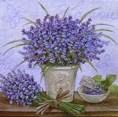 Lavanda violeta