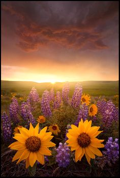 Amazing photo of beautiful flowers, with gold sunrise. Beautiful nature images, photos and pictures of flowers, landscape photographs. Nature photography that takes your breath away...