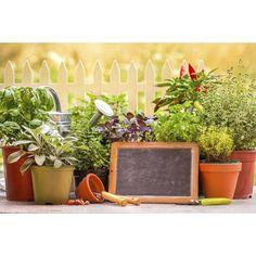 Diez plantas protectoras del hogar   eHow en Español