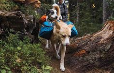 if you think you may ever be bugging out with pets. Bug Out Bag – Yes, dogs can have and carry their own dog bug out bag if they are the right size.