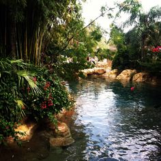 I swam in this , discovery cove <3