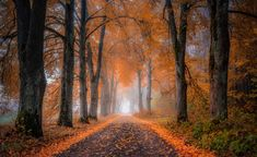 Landscape Photography, Paths, Country Roads, Scenery, Nature, Autumn, Trees, Background Ideas, Twitter