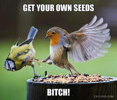 This is Sparta! #funny #bird