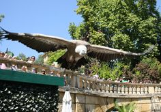 jardim zoologico 23.jpg
