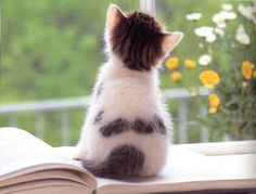 Adorable kitten on a book.