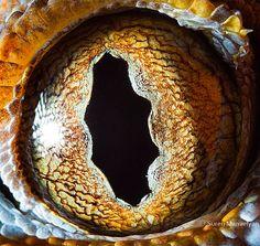 ¿Puedes adivinar el propietario? Nuevos Macro Fotos de Animal Eyes de Suren Manvelyan