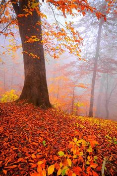 colour my world Autumn by Asghar Mohammadi Nasrabadi on Fivehundredpx Autumn Day, Autumn Leaves, Autumn Morning, Autumn Forest, Fall Winter, Beautiful Places, Beautiful Pictures, Autumn Scenery, Seasons Of The Year