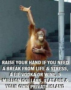 Top 60 Funny Memes And Hilarious Sayings 50 - Funny Monkeys - Funny Monkeys meme - - Top 60 Funny Memes And Hilarious Sayings 50 The post Top 60 Funny Memes And Hilarious Sayings 50 appeared first on Gag Dad. Funny Shit, Haha Funny, Funny Jokes, Hilarious Sayings, Funny Stuff, Funny Monkey Memes, Best Funny Quotes, Monkey Humor, Funny Memes For Him