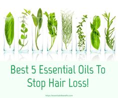 Essential Oils For Hair Loss, Hair Thinning And Alopecia Essential Oil Benefits Natural Beauty Tips, Natural Hair Care, Natural Hair Styles, Diy Beauty, Oily Hair Remedies, Hair Loss Remedies, Natural Remedies, Oil For Hair Loss, Stop Hair Loss