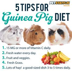 5 tips for Guinea Pig Diet.  5 tips para la dieta del Guinea pig o Conejillo de indias