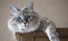 Datos curiosos sobre los gatos - www.notigatos.es/... #gatos