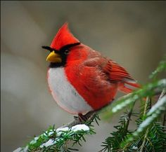 Really Angry Bird :-)