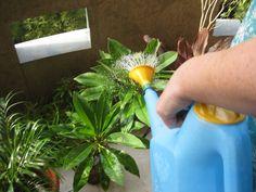 """A csodaszép szobanövények titka leggyakrabban a tápanyagforrásban keresendő. Ha nem áll kellő mennyiségű """"táplálék"""" a növények számára, akkor képtelenek növekedni, színes virágokat bontani. Ha nem akarunk pénzt költeni a tápozásukra, léteznek környezetbarát, szinte ingyenes házi praktikák is. Íme! 1. A szobanövények többsége szereti a cukrot, főként a kaktuszok. Ezért egy kiskanál porcukorral szórjuk meg a […]"""