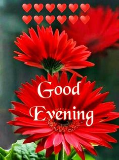 Good Evening Love, Good Evening Photos, Good Evening Messages, Good Evening Wishes, Good Evening Greetings, Evening Pictures, Cute Good Night, Good Night Wishes, Good Morning Gif