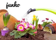 Mês de junho   O que fazer no seu jardim este mês    Saiba quais os cuidados a ter este mês com as flores, plantas, hortas, árvores e arbustos. #oleomac #oleomacportugal #OM #junho #jardim #plantas #árvores #arbustos #hortas #flores #estilodevida #cuidados