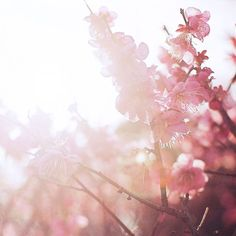 """Musibah itu, mengecil jika dirahasiakan, membesar jika dikeluhkesahkan, terurai jika diadukan pada Allah, merumit jika diumbar pada manusia."" - Salim A.Fillah."