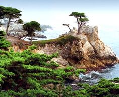 The Lone Cypress in Carmel , California , Photo Taken by Clark Dugger Places To Travel, Places To See, Places Ive Been, Wonderful Places, Beautiful Places, California Dreamin', California Honeymoon, Monterey California, Carmel By The Sea