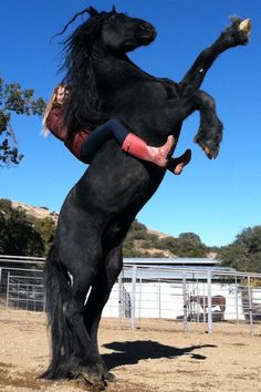 Horse from Zorro. Trained in LA. And people say horseback riding isn't exercise...how do you think we stay on?