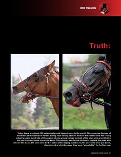 ISSUU - Unmasking of equestrian sport by NevzorovHauteEcole