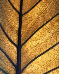 29 padrões fractais hipnotizantes encontrados na natureza 07