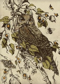 Owl by the talented Teagan White design & illustration Art And Illustration, Gravure Illustration, Illustrations, Owl Art, Bird Art, Great Horned Owl, Ouvrages D'art, Sketches, Art Prints