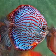 Pets Care - Master of Pets Aquarium Fish, Fish Aquariums, Discus Fish, Pet Dogs, Pets, Angel Fish, Beautiful Fish, Freshwater Fish, Tropical Fish