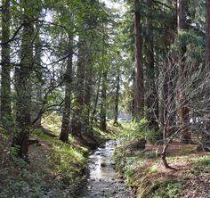 Strawberry Creek | by Wnewton1948