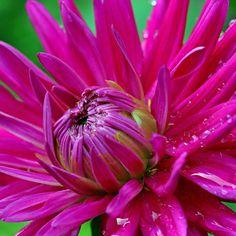 12 ДЕЛ НА КОТОРЫЕ ВЫ ОБЯЗАНЫ НАЙТИ ВРЕМЯ  Знаменитый #пропагандист здорового образа жизни Поль Брэгг о том как #рационально использовать #самое #ценное что у нас есть:  7/12.Найдите#время для #любви и #сострадания - это это #священный #дар #жизни.  #12дел #зож #польбрэгг #йога #мысли #yoga #thoughts #health #lifestyle #healthylifestyle #стильжизни #образжизни #самоеценное #здоровье #12вещей #польбрегг #paulbragg #любовь #сострадание #даржизни