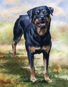 ROTTWEILER Dog Watercolor ART PRINT Signed by by k9artgallery