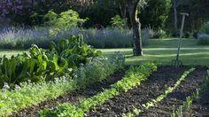 Risultati immagini per potager Potager Garden, Garden Planters, Garden Landscaping, Fruit Garden, Green Garden, Vegetable Garden Tips, Types Of Roses, Contemporary Landscape, Plantation
