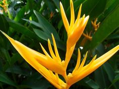 Get ideas for tropical plants for your home or garden from the experts at HGTV.com.
